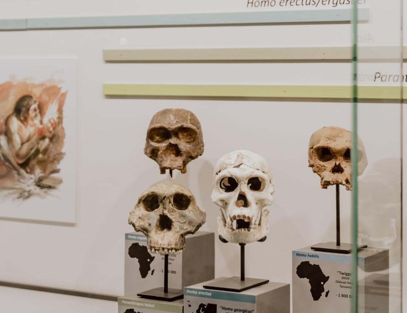 Musée du Malgré tout 5