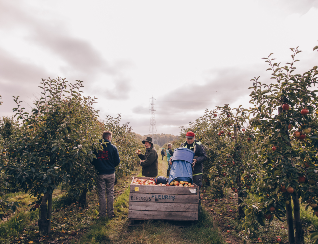 Les jus de pommes des Vergers de Fleurus sont locaux, artisanaux...et surtout délicieux